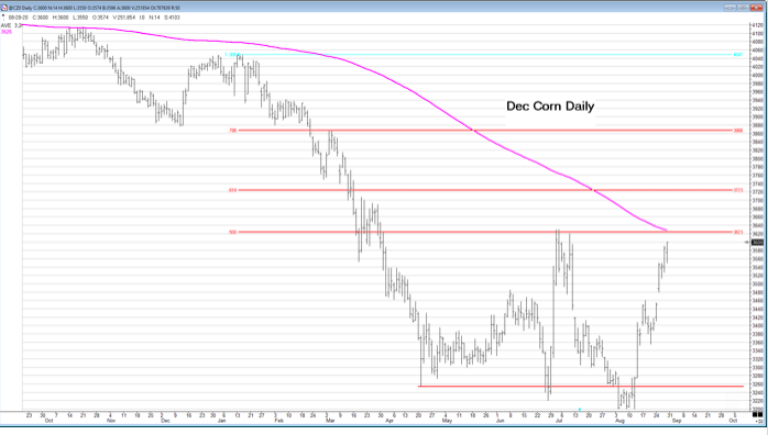 Dec Corn Daily